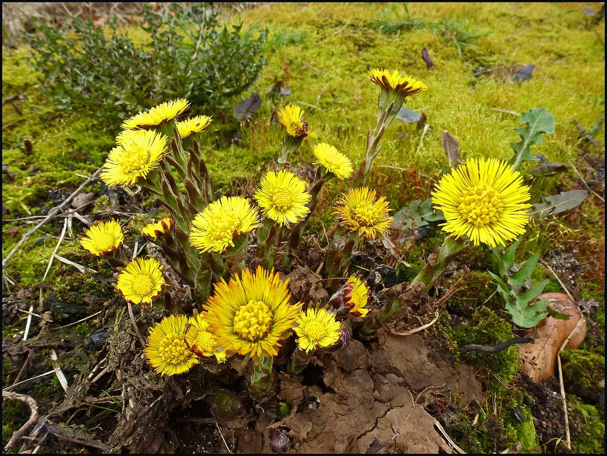 Die ersten Frühjahrsblüher im Lamperstal