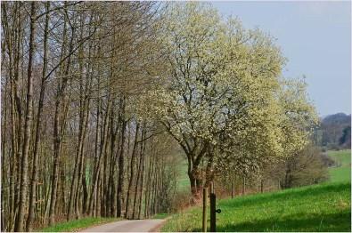 Das Sahrbachtal - Ein Wanderparadies