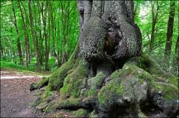 Dick_Bauch_Baum