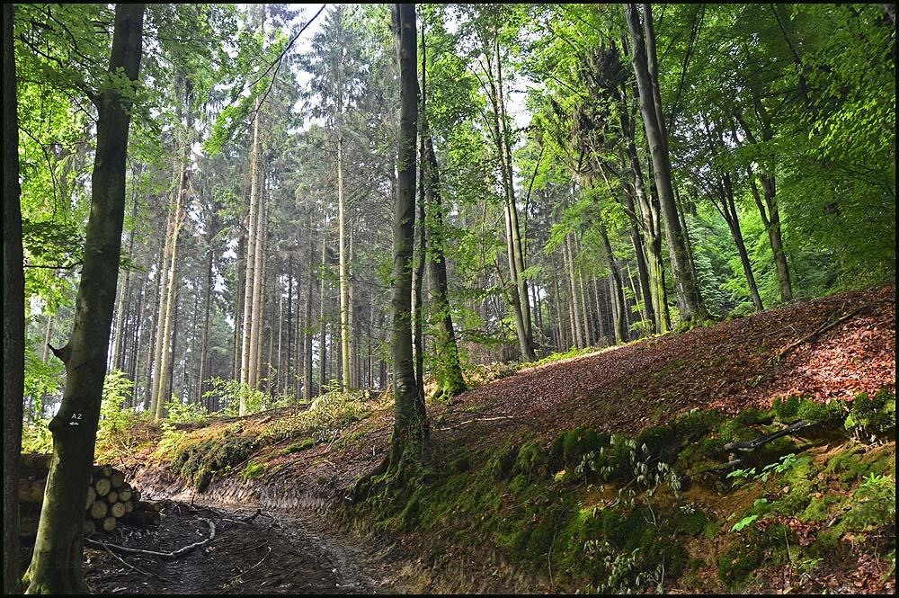 Waldwege im späten Frühjahr