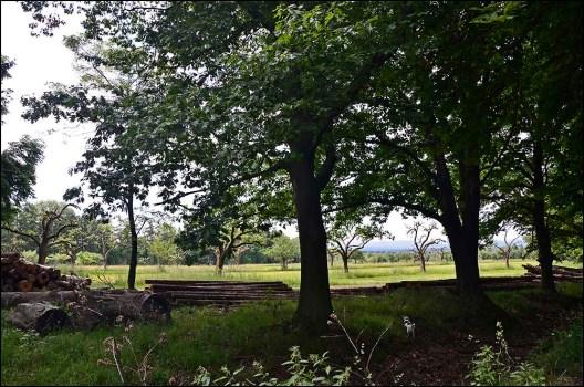 Der Blick durch die Bäume auf die wiesen....herrlich