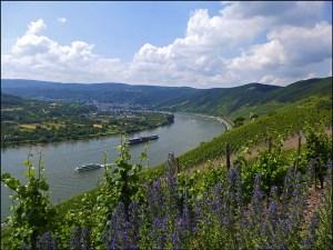 Rheingoldbogen (124)