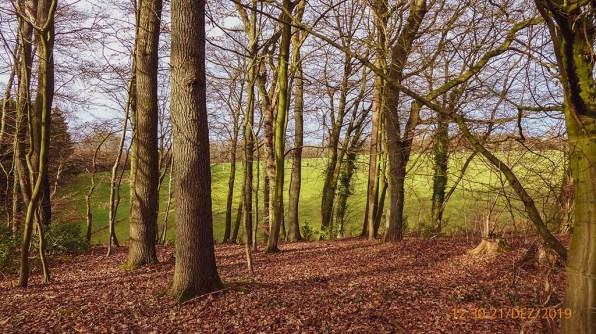 Durch die Bäume geschaut in Neschen