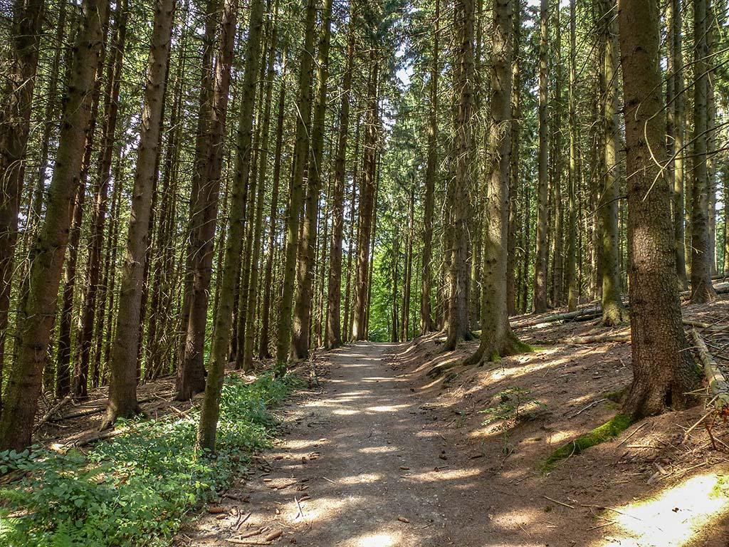 Schattige Waldwege zum verlieben