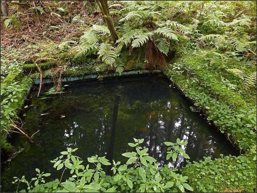 Mitten auf einem abwärts laufenden Trailweg finden wir dieses kleine Becken, indem sich Kausquappen tummeln, aber sonst keine erkennbaren Lebewesen und auch keine erkennbare Funktionalität.