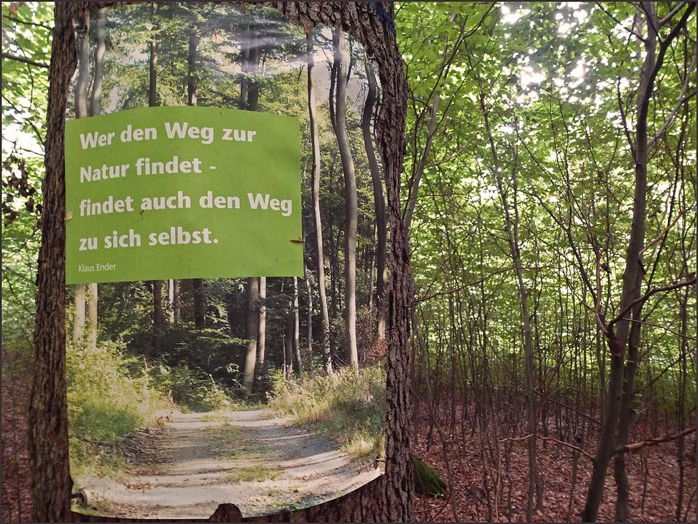 Waldschluchtenpfad (24)