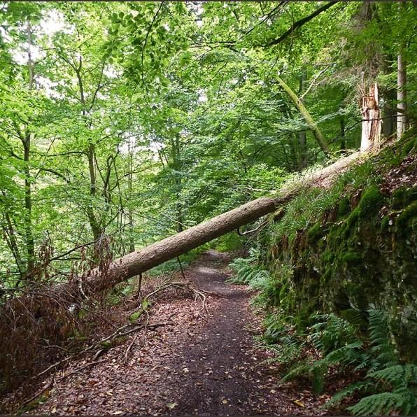 Waldschluchtenpfad (82)