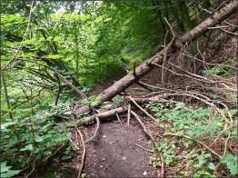 Waldschluchtenpfad (84)_bearbeitet-1