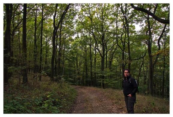 Kleinere Waldabschnitt