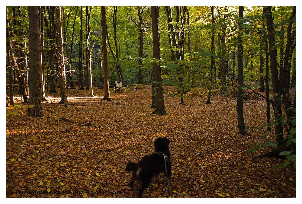 Spike im Wald Voiswinkel im Herbst