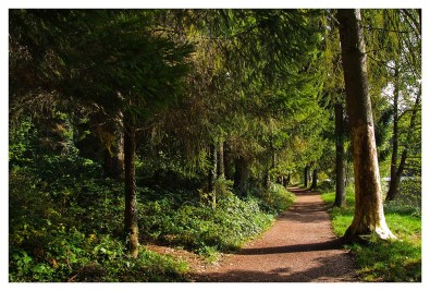 Waldweg entland der Talsperre