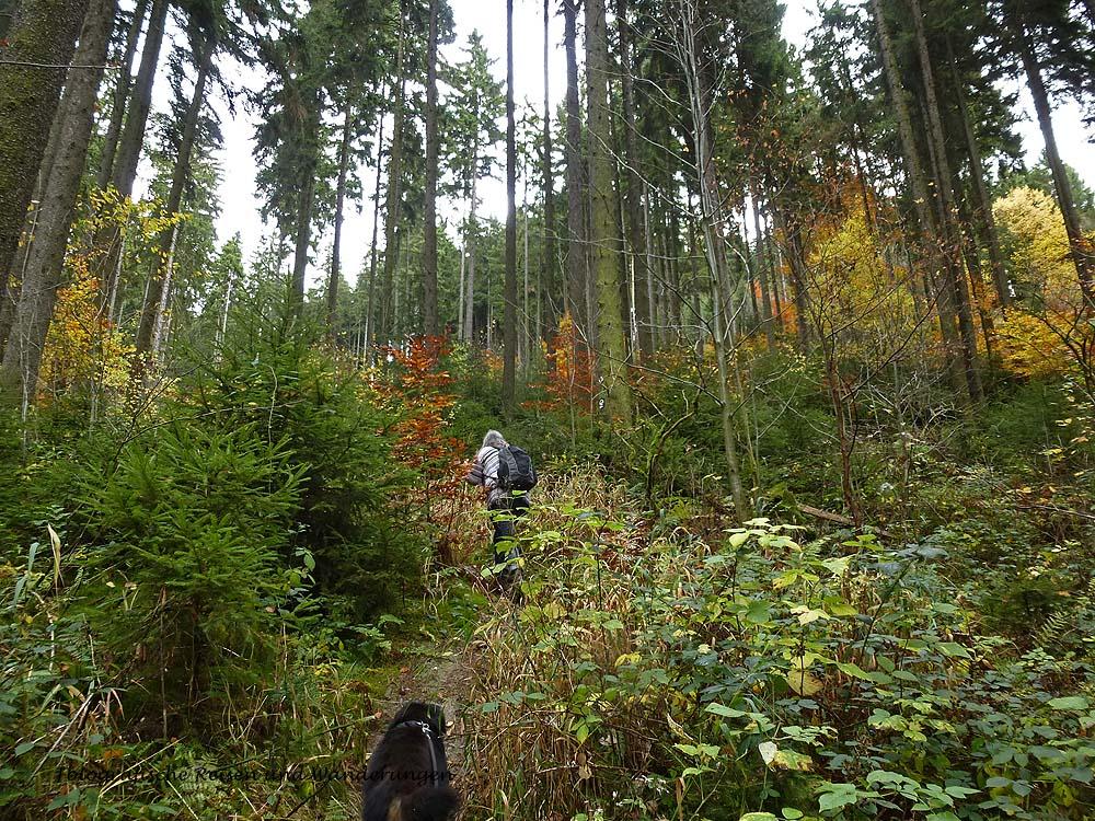 Wir wandern durch so herrlich bunte Wälder