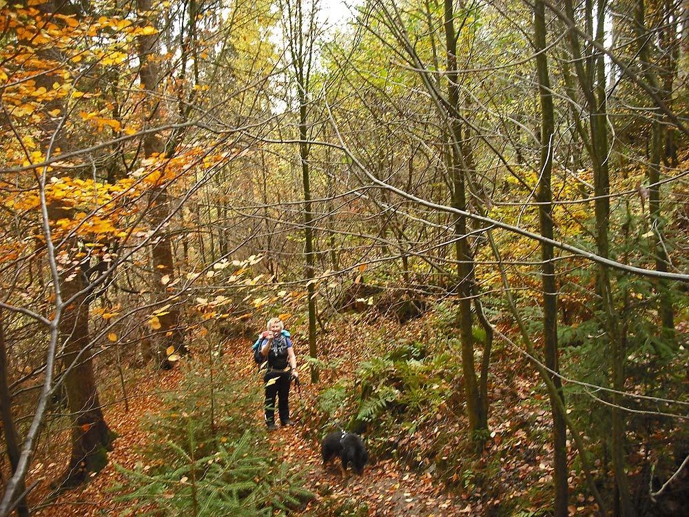 Viele Bäume haben ihr Laub schon nahezu komplett ab geworfen