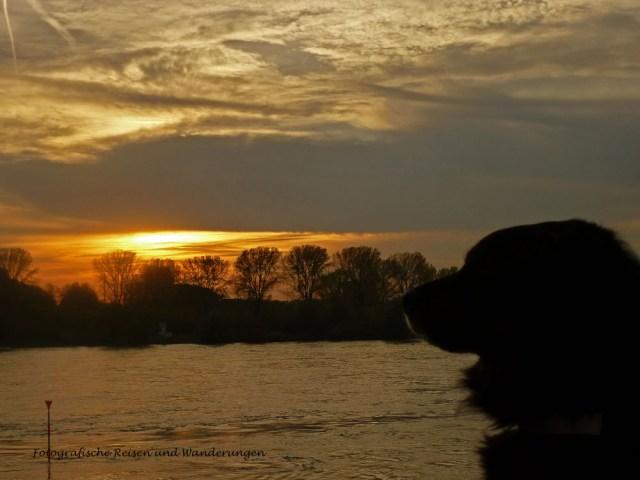 Am Ende gibt es noch eine Fotosession mit Spike am Rhein. Bei untergehender Sonne ist die Stimmung sehr schön