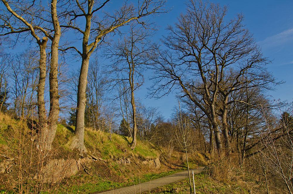 Heimatweg (40)