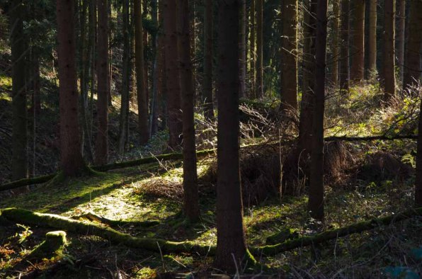 Moenchweg (88)