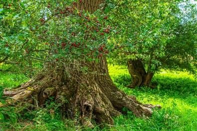 Der Fuße eines Baumes in den Urdenbacher Kämpe -