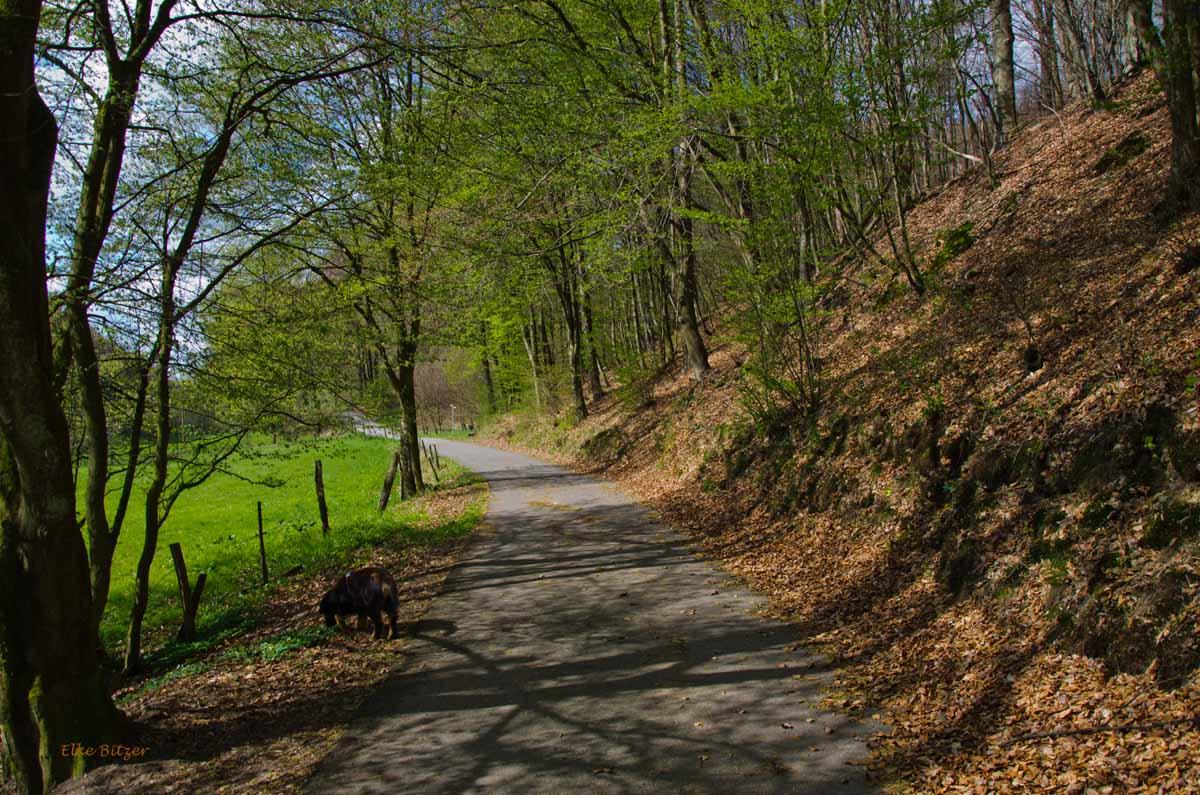 Mühlen und Bäche im Eifgenbachtal (103)