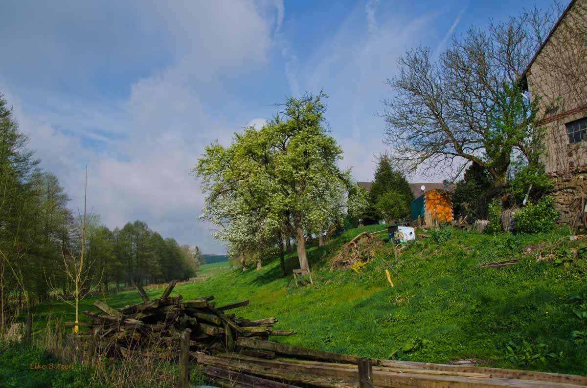 Mühlen und Bäche im Eifgenbachtal (63)