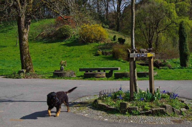 Mühlen und Bäche im Eifgenbachtal (94)