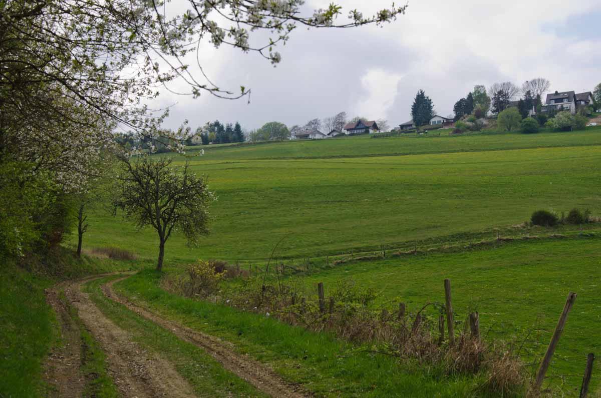 PanoramawegLind (75)