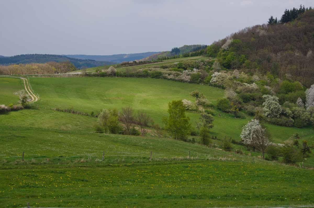 PanoramawegLind (87)