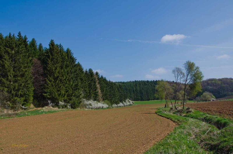Schoenecker Schweiz (59)
