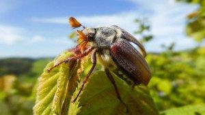 Lampertstal und Kalvarienberg (5)- Unsere Welt ohne Insekten