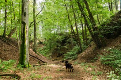 """Hinein in den alten Steinbruch """"Am Witschenberg"""", mystisch sieht es hier aus"""