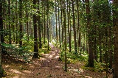 Die Wälder sind der Knaller. Das Licht fällt scheinbar ungehindert durch die Baumwipfel und so ist es hier hell und freundlich