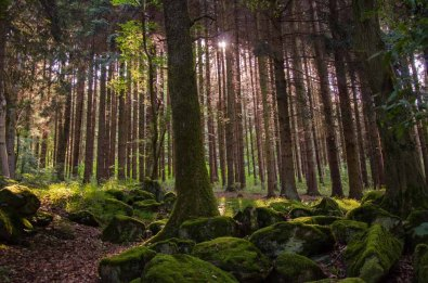 Wandern_in_und_um_die_Holzbachschlucht_0022