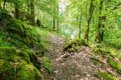 Über die Höhen des Westerwald