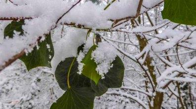 2015 01 24_Homezone im Schnee_00291