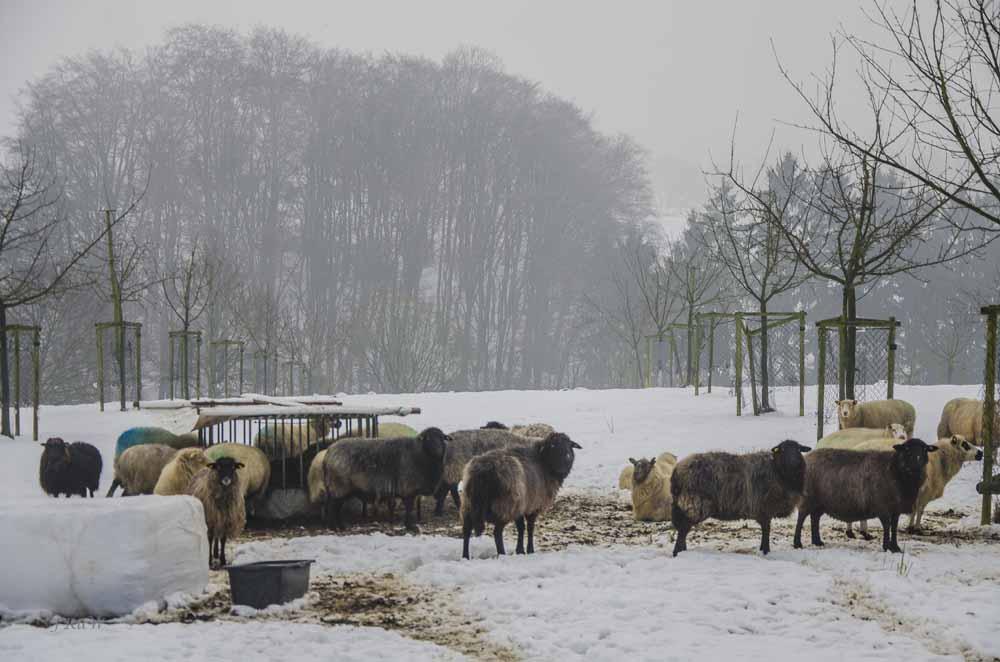 Eselsweg_0354