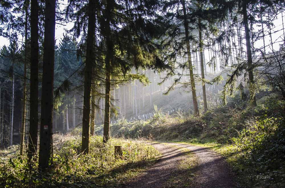 Traumpfad Schwalbenstieg_0088