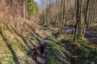 Monschau - Höfen - Rur - Perlenbachtalsperre_0923