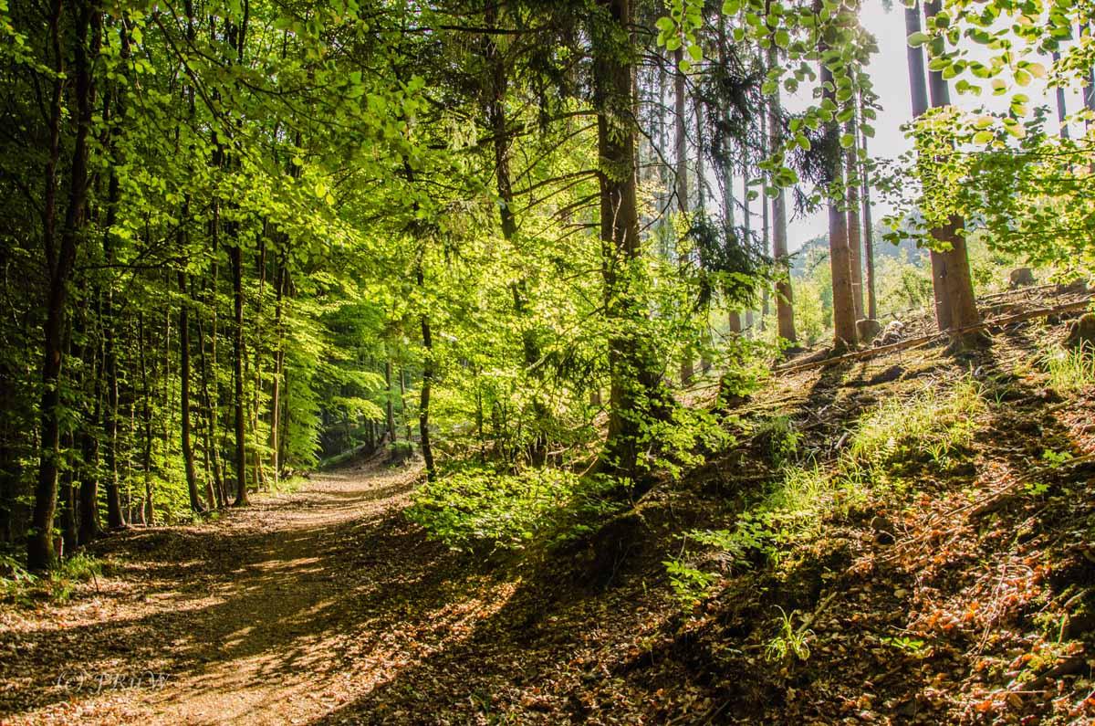 Greifensteinwanderung_0037