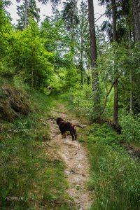 Urlaub Harz 2015_0006
