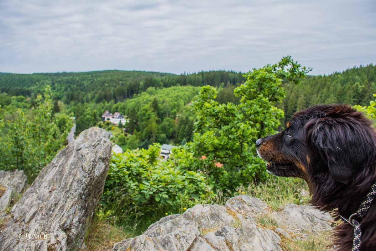 Wandern Harz Region im Selketal - Tolle Aussicht - TOP Wandervorschläge im Harz