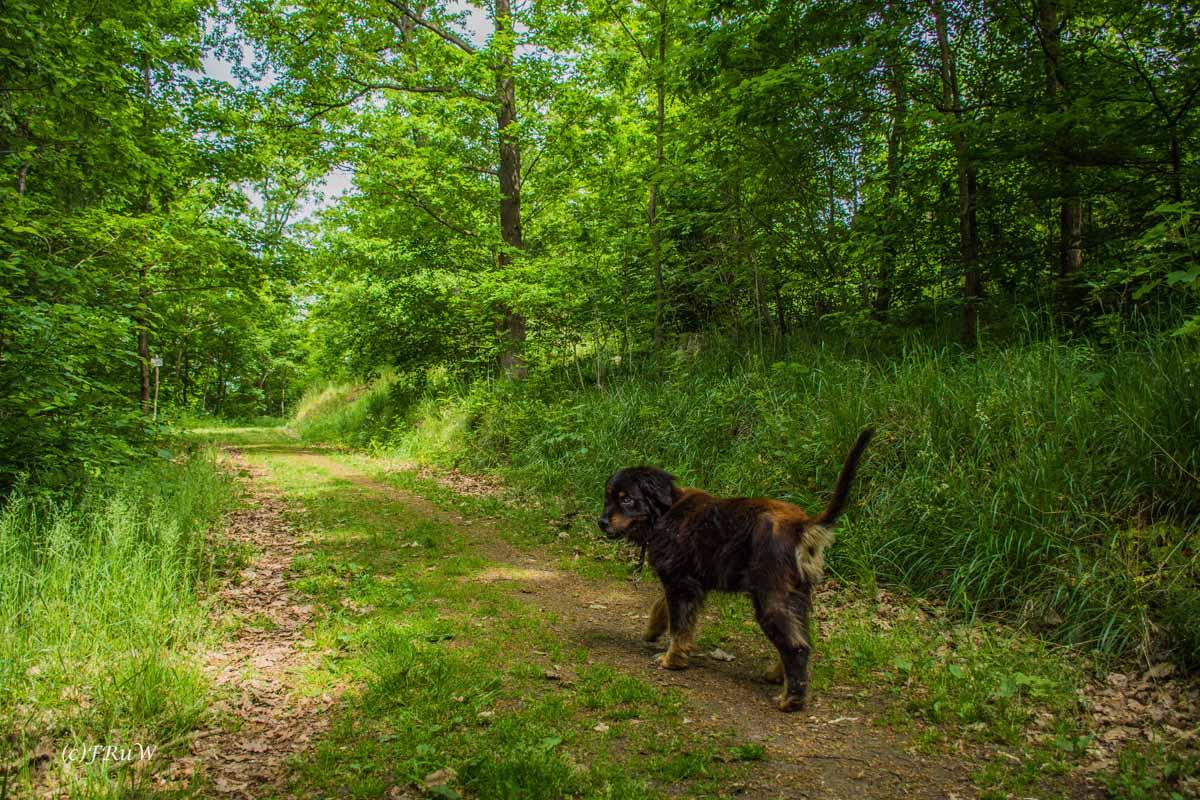 Urlaub Harz 2015_0030