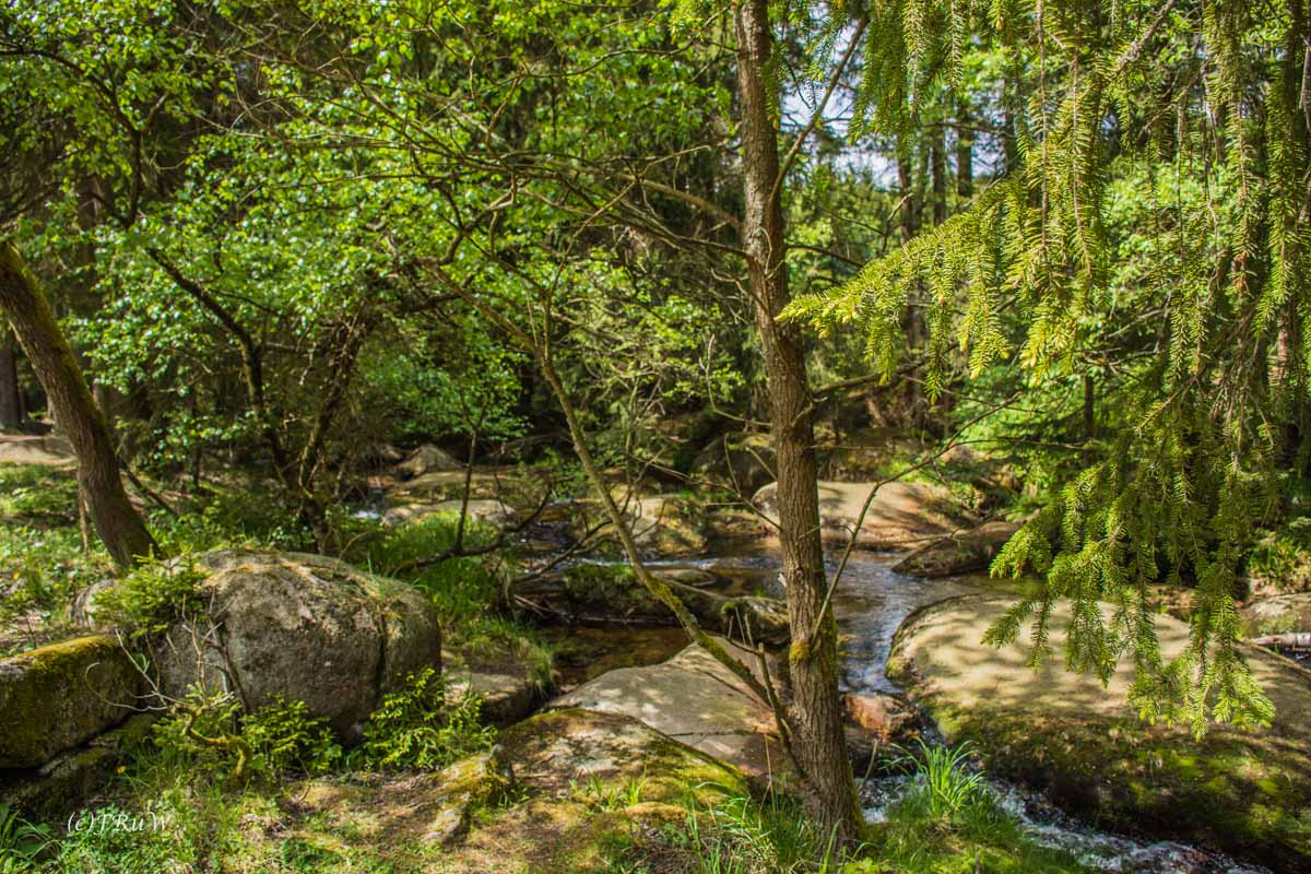 Urlaub Harz 2015_0433