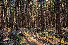 Urlaub Harz 2015_0503