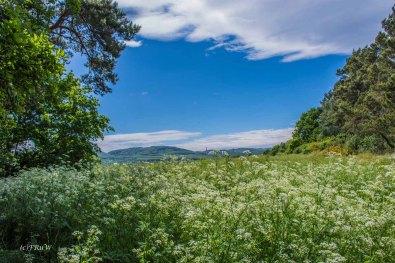 Urlaub Harz 2015_0872