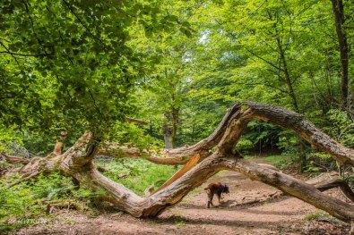 Urwald im Reinhardswald