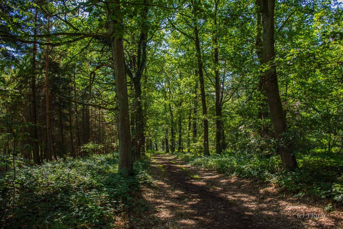 Waldwege auf der Appolinarisschleife
