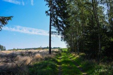 Wacholderweg_0130