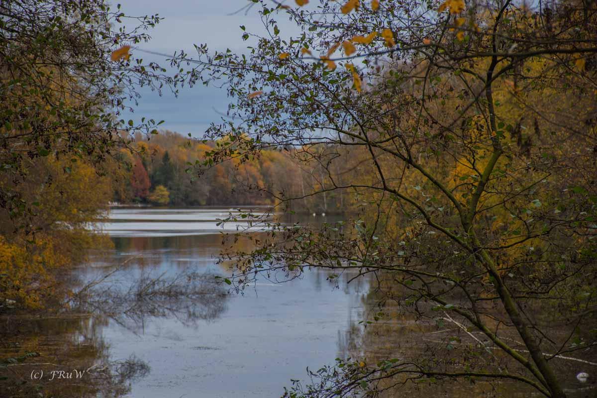 Brühler Seen (110)
