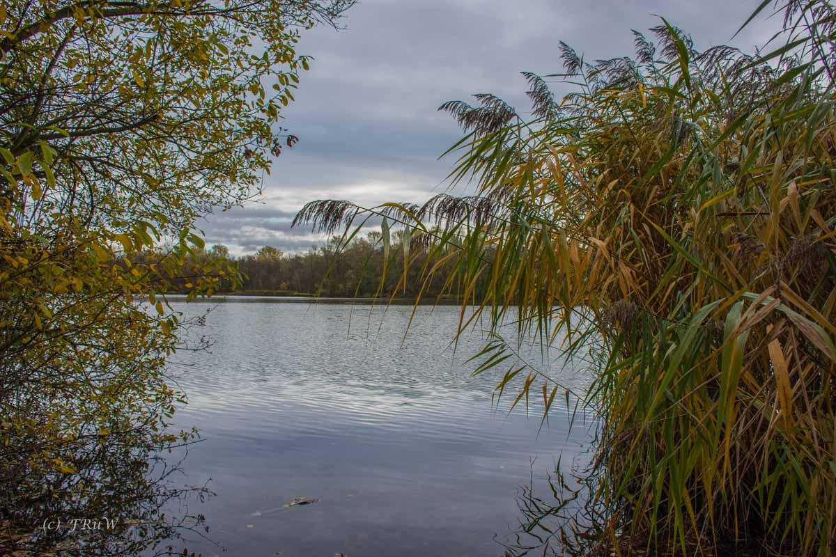 Brühler Seen (95)