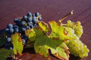 Ein Geschenk des Weinbauern
