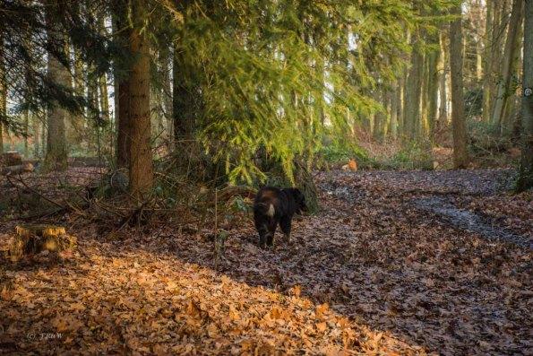 Wanderlust_an_der_Emscher_01 (111)
